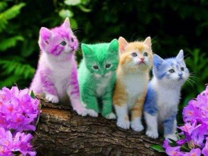 Ca-R-Ma: Antigonish Easter Kitties Image
