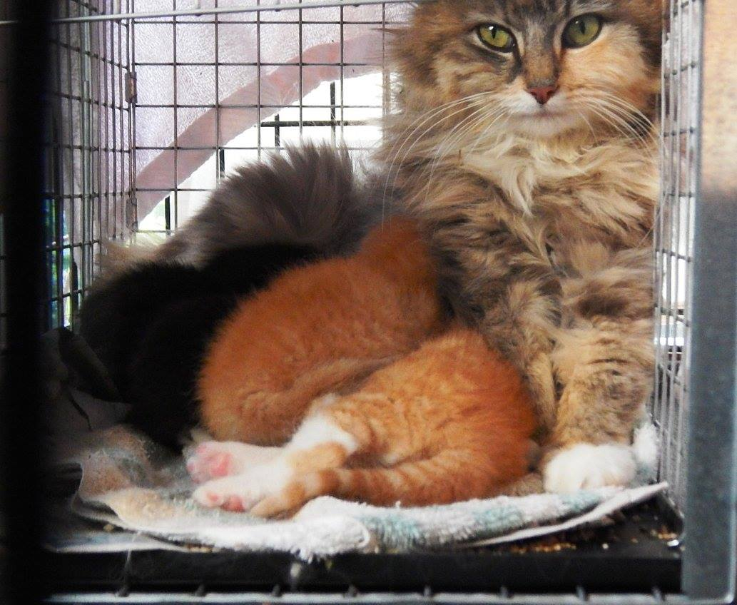 Mother cat and kittens abandoned - and all are now adopted thanks to Ca-r-ma Charlotte.